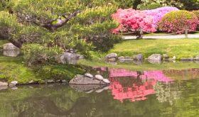 Japanese Garden, April 2016