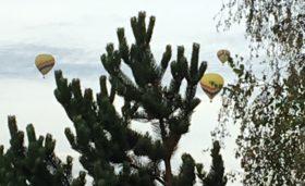 hotairballoons92016